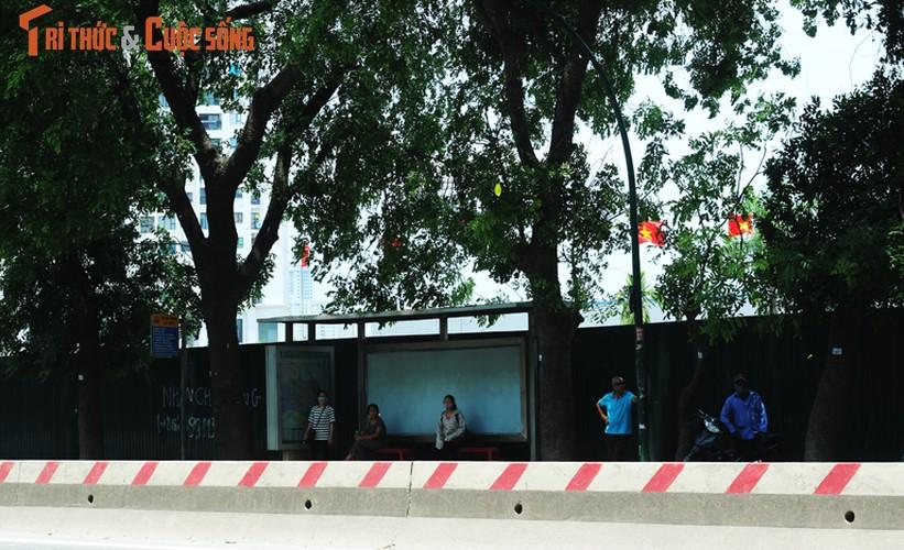 Ngam hang cay xanh muot tren duong Pham Van Dong truoc khi chat ha-Hinh-7