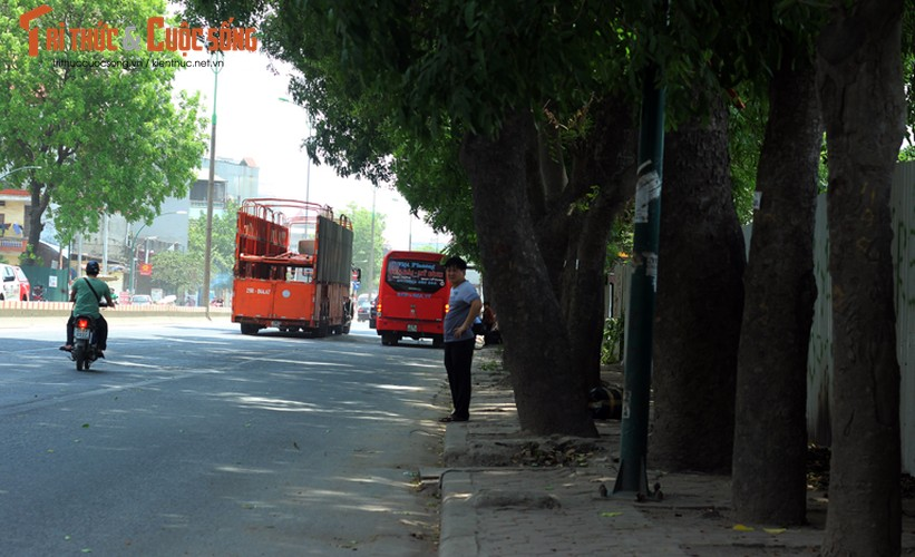 Ngam hang cay xanh muot tren duong Pham Van Dong truoc khi chat ha-Hinh-8
