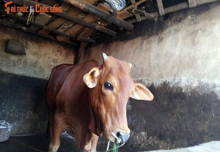 Anh: Canh khon kho cua nguoi bi danh oan vi nghi bat coc tre em o HN-Hinh-12
