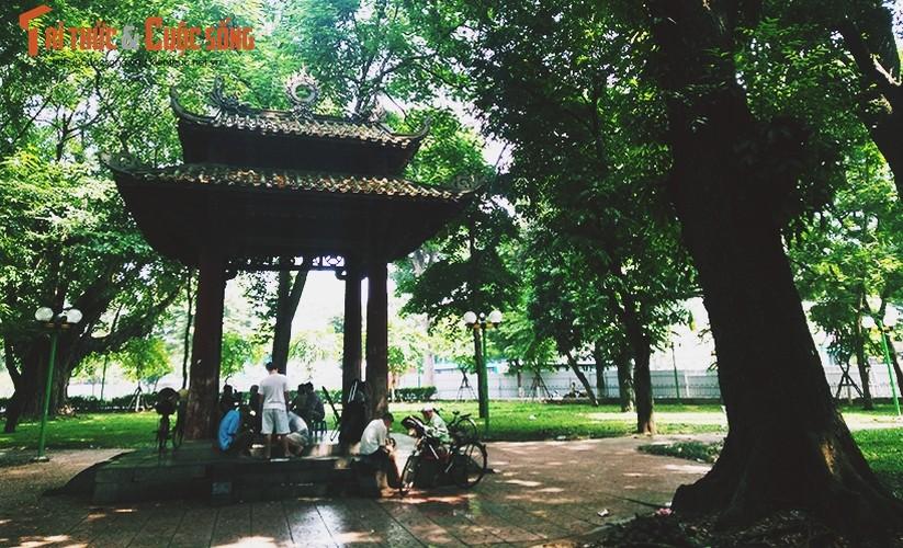 Ngan ngam canh dao xoi nham nho o cong vien Le Nin, Ha Noi-Hinh-13