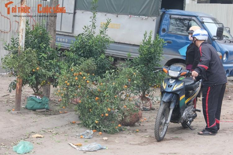 Chum anh: Khong khi chieu 30 Tet Dinh Dau o Ha Noi-Hinh-3